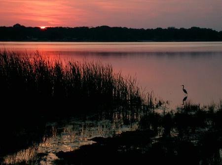 Egrets' Dawn
