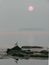 Red Sun and Seagu...