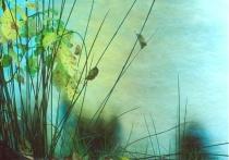 Reeds & Water