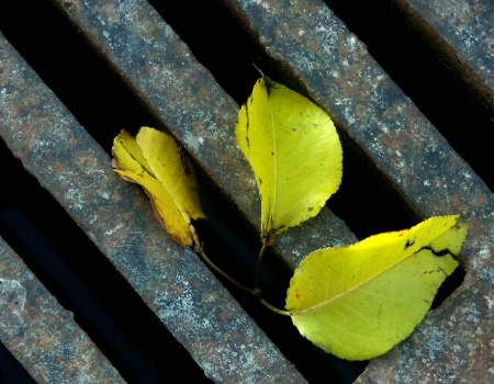 Leaves on Grate