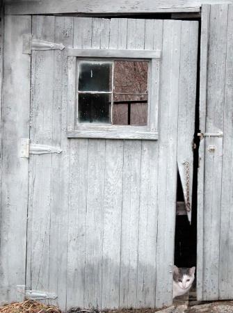 Buster at the Barn Door