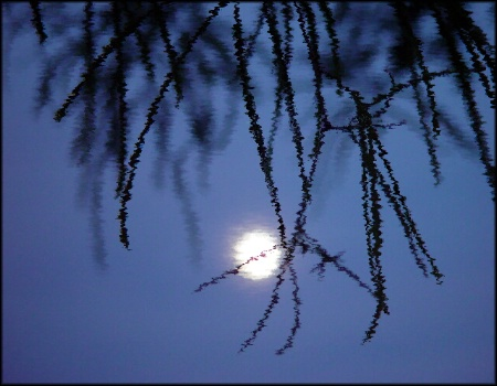 reflected moonlight