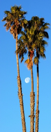 Moon in palms