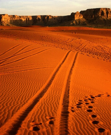 Tracks Through Red Sand