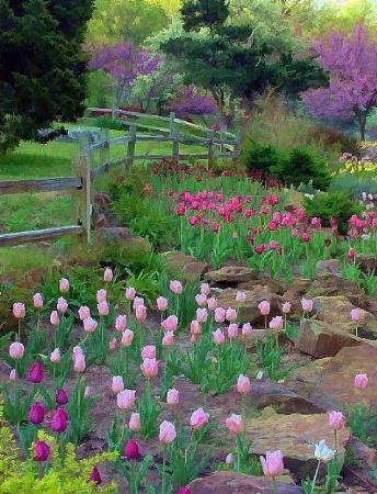 Floral Fenceline