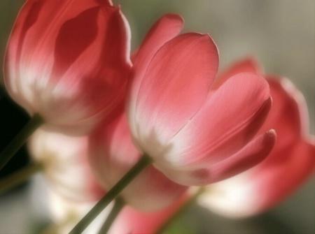 Softly Spring