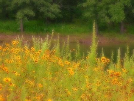 Bunny Creek Spring