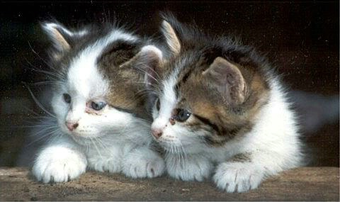 Cute Kitties!