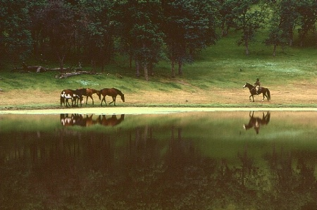 Horse Reflections 2
