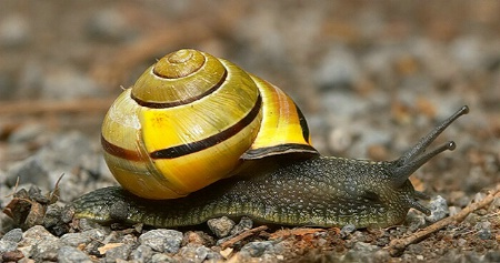 Zippy Snail