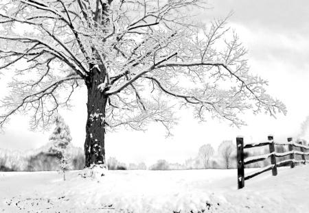 Last Snowfall of the Year