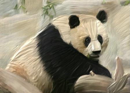 Panda in Oil
