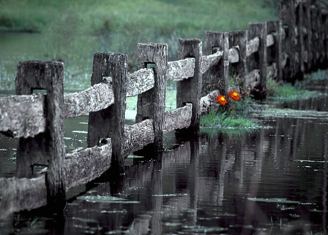 Flowers in flood..