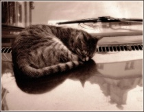 ~cat on a hot tin...