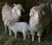 Farm Family Portr...
