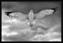 High-flown