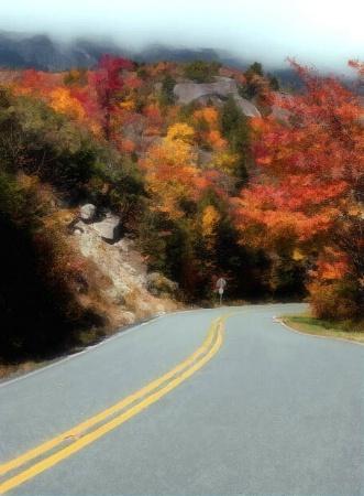 Heading 4 Fall