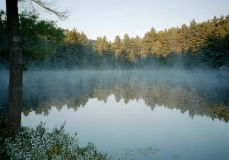 Morning Mist on Clear Lake