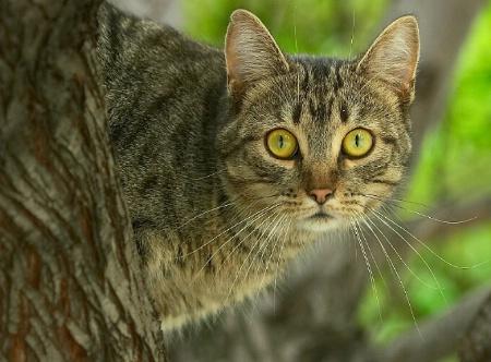 The Hoo-dat Cat