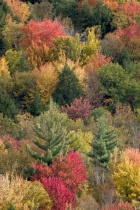 Photographing Fall Fairyland