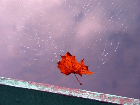 Red On The Web