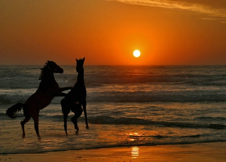 Horse Play in the Surf