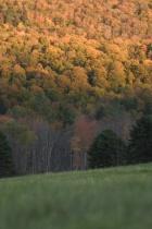 Hillside at Dusk