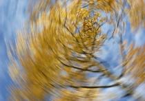 aspen twirl