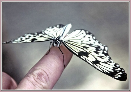 Giving The Finger To A Butterfly