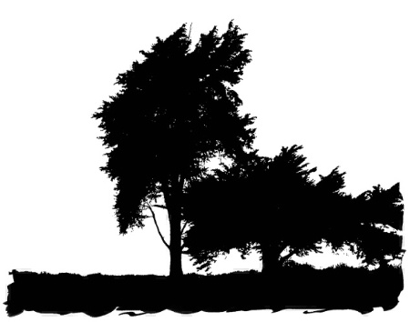 Trees in Black and White