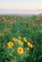 fine art nature photo - field