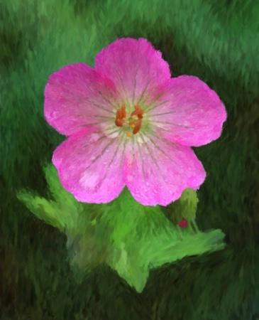 Wild Geranium - Van Gogh