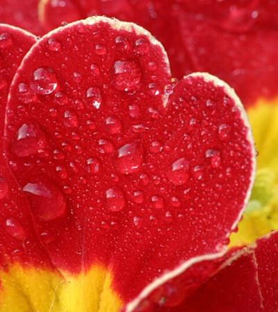 Wet Heart.