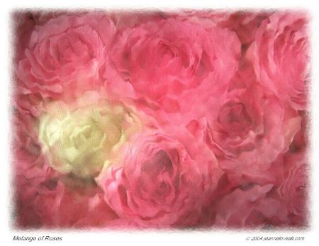 Melange of Roses