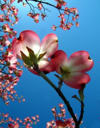 Virginia Flower