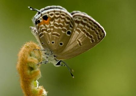 Butterfly on Fern