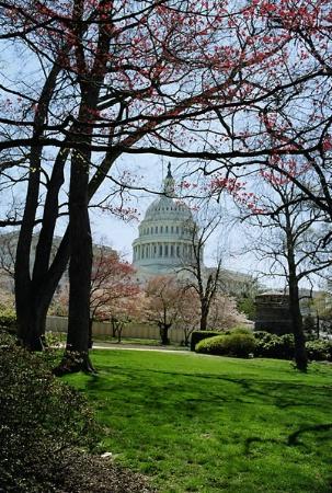 US Capitol in April