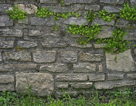 Thur the Wall