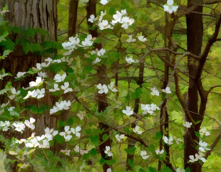 Painted Dogwoods