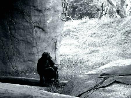Contemplation*