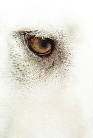 Eye Of Mai
