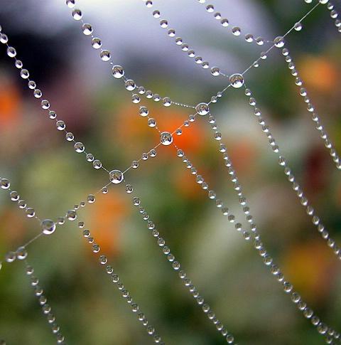 Morning Beads