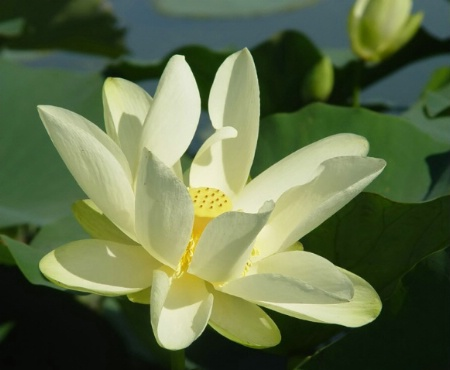 Lovely Lily*