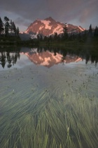 Mt Shuksan and Picture Lake Grass