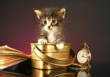 pretty lttle kitty