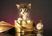 pretty lttle kitt...
