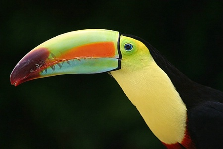 a beak of many colors