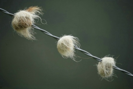 Wool on Wire