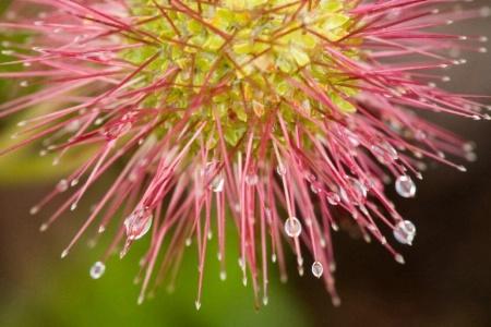 Bidbidi Plant