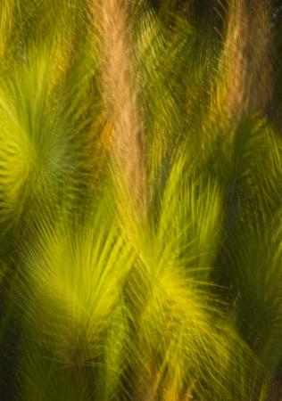 multi_palms